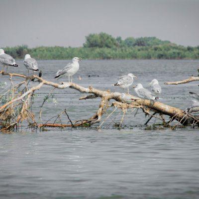 Wild-landscape-of-the-Delta-Danube